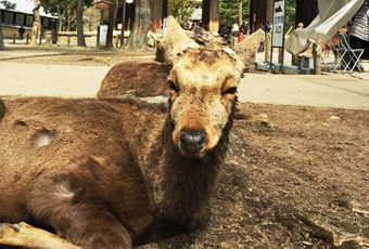 奈良鹿公園