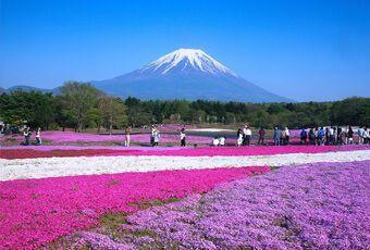 立山黑部富士芝櫻祭