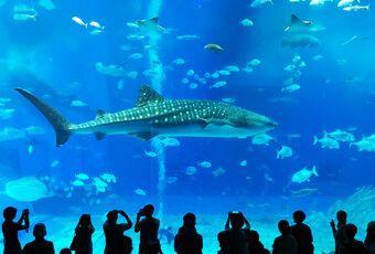 沖繩海洋博主題樂園