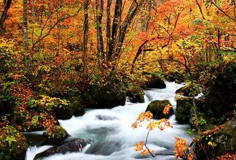 日本東北奧入瀨溪