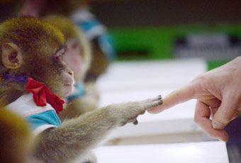 蘇梅島猴子訓練學校