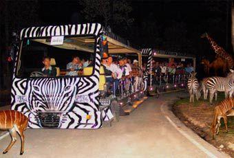 巴里島SAFARI MARINE PARK野生動物園