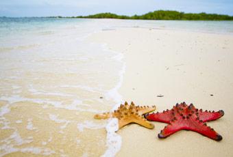 巴拉望海星島