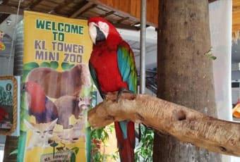 吉隆坡電信塔迷你動物園
