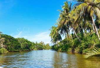 巴拉望紅樹林 Mangrove