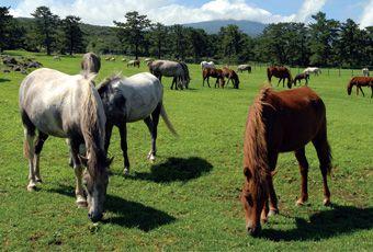 濟州島古藪牧馬