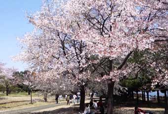 首爾一山湖水公園