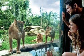巴里島旅遊BALI ZOO奇幻動物園