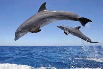 巴里島海豚尋蹤之旅