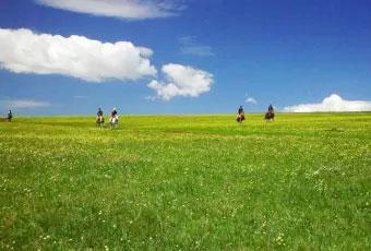 寧夏旅遊馬蘭花大草原