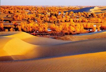 新疆塔克拉瑪干沙漠