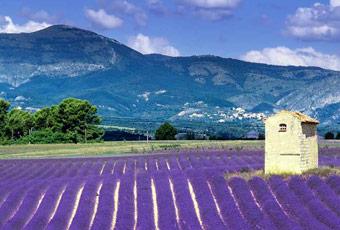 普羅旺斯村Provence