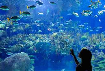 埃及旅遊赫加達水族館