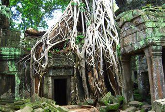吳哥窟塔普倫廟Taprohm Temple