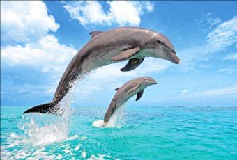 帛琉太平洋海豚灣