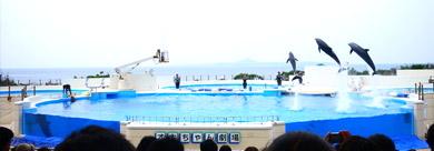 沖繩海豚劇場海豚表演