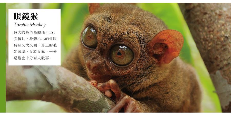 迷你眼鏡猴(TARSIUS MONKEY)