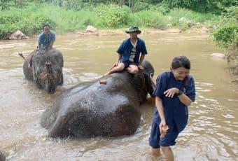 清邁親子遊-友善大象一日體驗營,來幫大象洗刷刷囉!