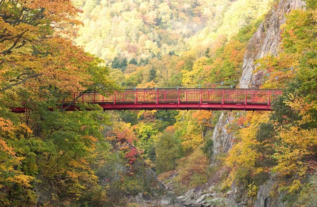 北海道旅遊:秋天景致