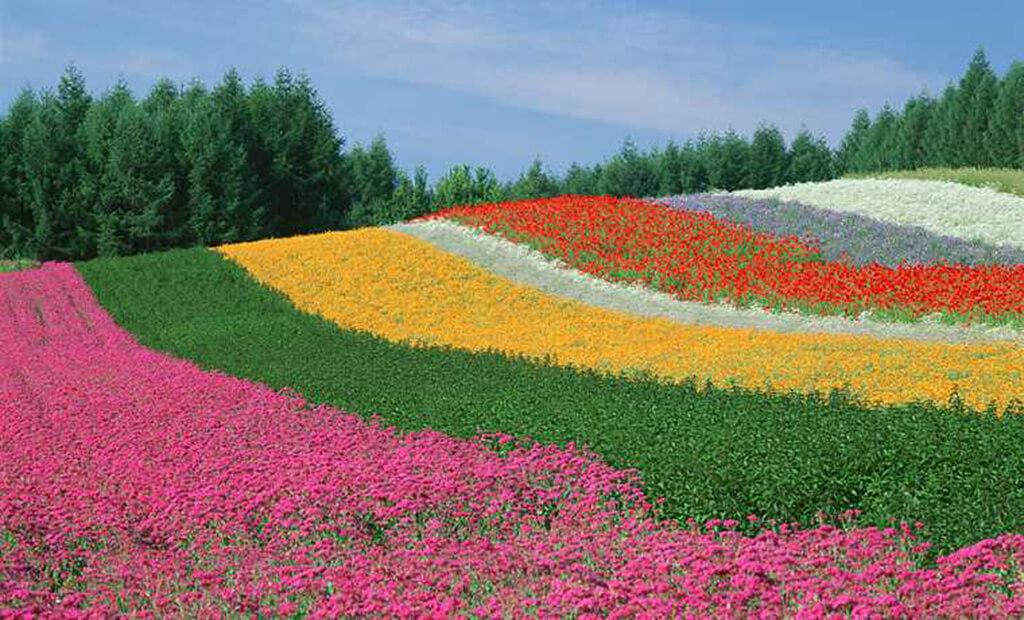 富良野花樂園