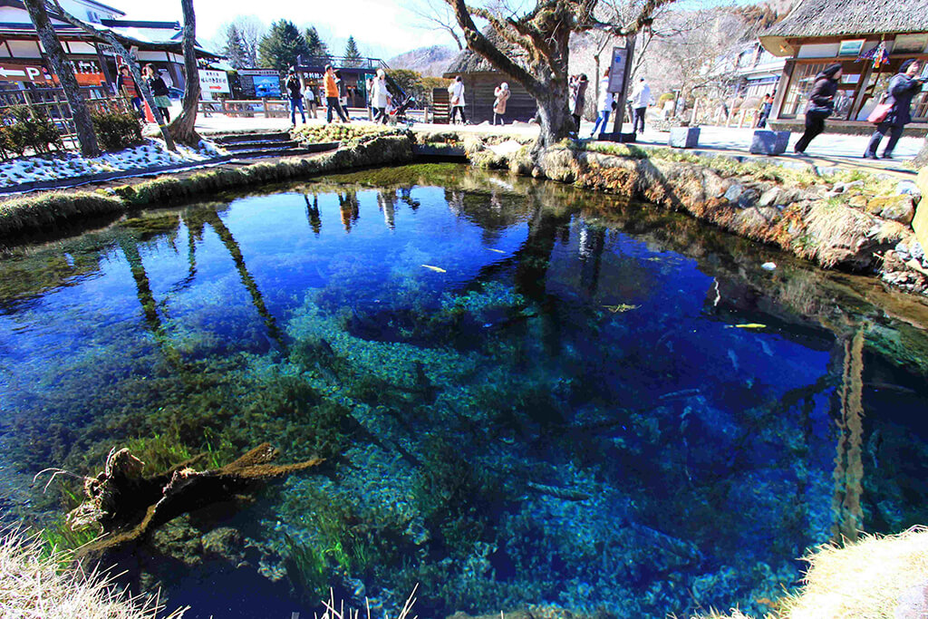 忍野八海的湧池