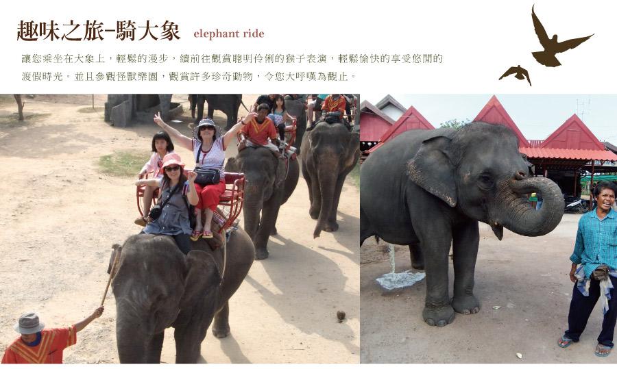 趣味騎大象