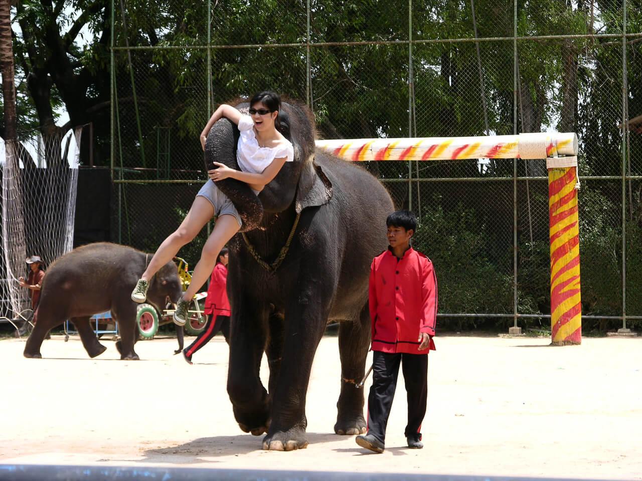 泰國海島自由行路線推薦:大象表演